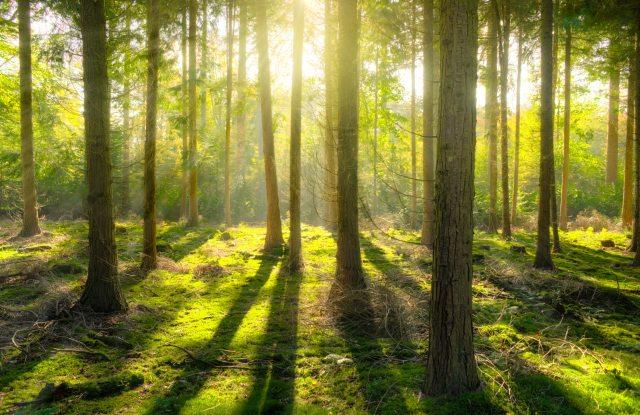 bright-daylight-environment-240040